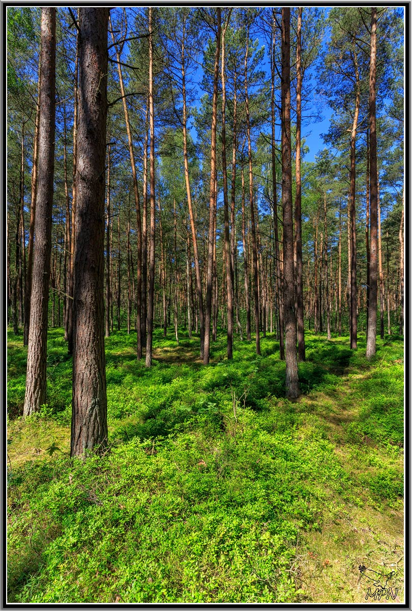 mpn-usedom-0030
